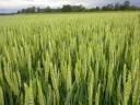 Mezőgazdasági támogatások ügyintézése Adminisztráció