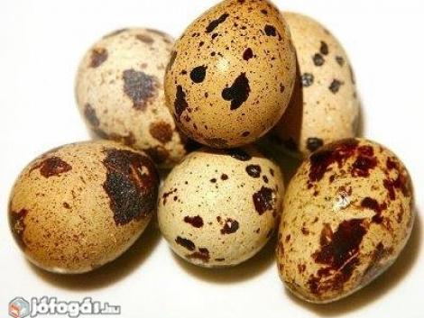 Fürj tojás Keltetésre vagy étkezésre eladó fotó