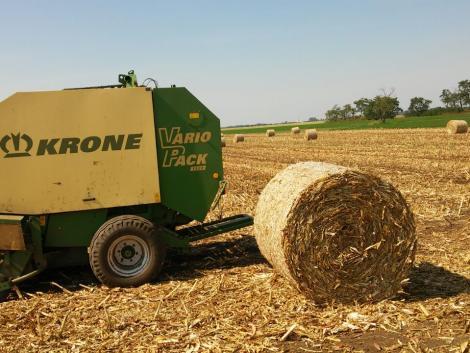 Körbálázott kukoricaszár eladó fotó