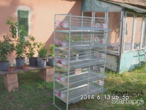 Fürj farm kiépítését vállalom eszközök legyártásával termelésbe állítással betanítással fotó