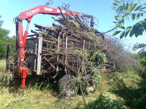 Erdészeti pótkocsi ! fotó