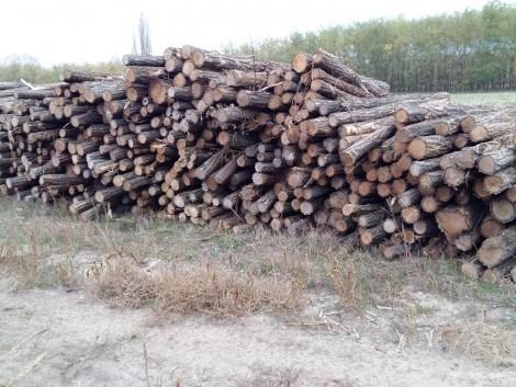 Vegyes 2m-es tűzifa eladó! fotó