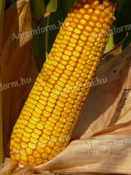 12aa3a8fab Kukorica vetőmag - Ár/érték arányban verhetetlen (aktív) - kínál - Dusnok -  28.000 Ft +ÁFA - Agroinform.hu