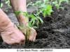 kertészeti és mezögazdasági munkákat vállalok