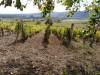 Eladó szőlőültetvény Tokaj Hegyalján Tállyán
