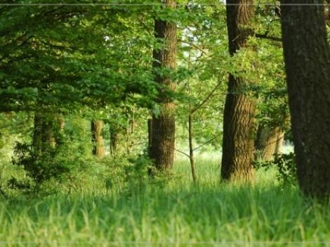 Erdő-Natura: indulnak a 2012. évi kifizetések, beadhatók a 2013. évi kérelmek