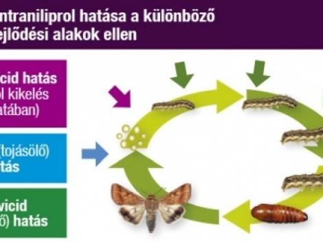 Hetet egy csapásra!  Voliam Targo - Új megoldás a zöldséghajtatás rovarkártevői ellen!