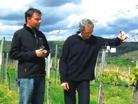 A BASF online szőlővédelmi előrejelző rendszere: tapasztalatok és tervek
