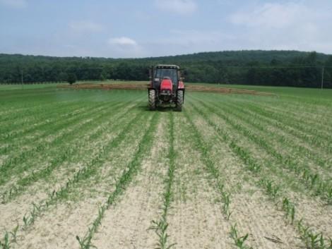 Nic-It és kombinációi biztos partnerek a kukorica posztemergens gyomirtásában!