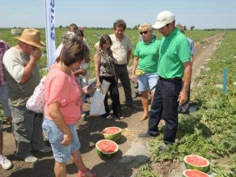 Nagyobb területen terem a zamatos és egészséges görögdinnye