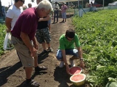 Kiváló magyar görögdinnye fajták a Syngentától! (+ Videó!)