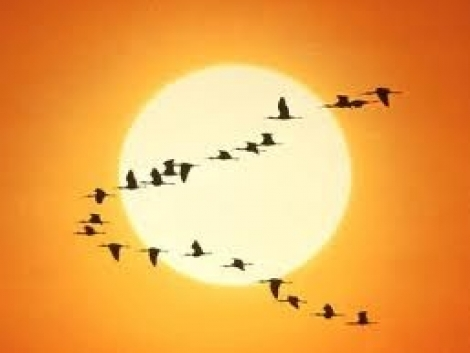 A klíma felmelegedése miatt a lepkék, madarak északabbra vándorolnak