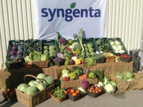 Káposztafélék termelői évértékelése - Syngenta szakmai nap (+Videó)