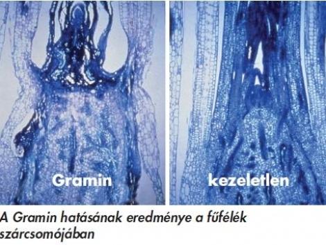 GRAMIN – szuperszelektív egyszikűirtó a Nufarmtól