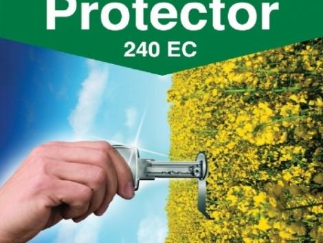 PROTECTOR 240 EC – A repcetermesztés kulcsa