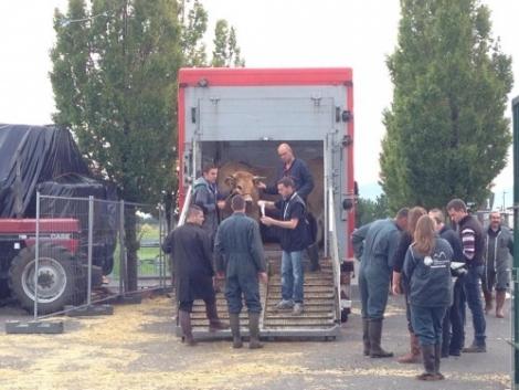 Állati nagy show volt a Sommet de l'Elevage 2014 kiállítás! (+Képek)