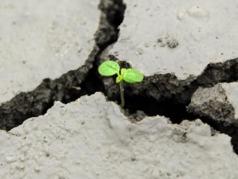 A klímaváltozás talajra tett hatásai