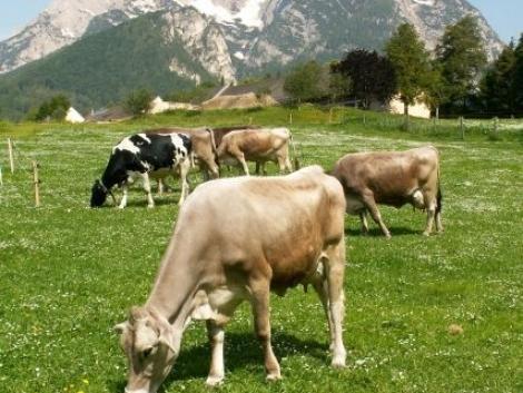 Biotermelés Németországban