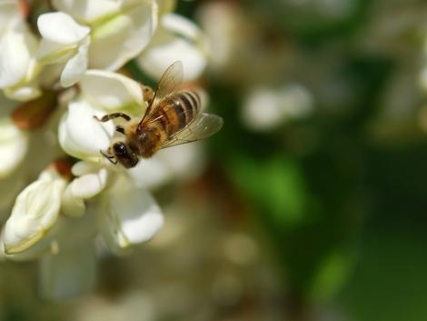 Figyeljen a méhekre permetezéskor