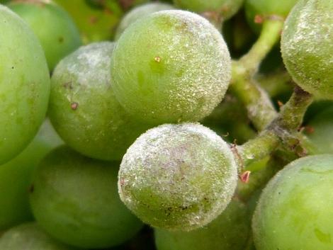 Készüljön a várható növénybetegségekre időben