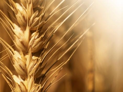 Mire készüljön idén a gabonatermesztő?