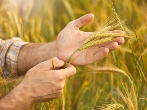 Talajjavítás felsőfokon – A Timac Agro Hungária Kft. ajánlásával