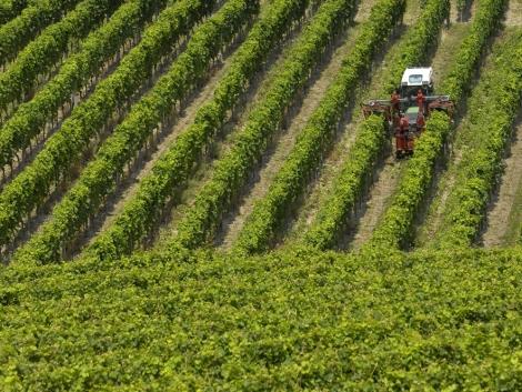 Új ültetvényes gépek az Agroázis kínálatában