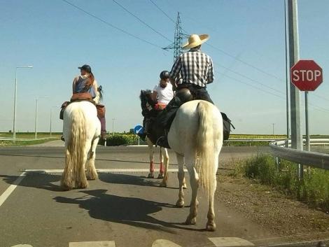 Nyeregszelme, rodeó, lovassportok, csikósok! (+Képek!)