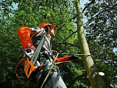 Az erdészet legújabb gépei Bolognából
