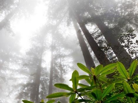Így szennyezi a nitrogéntrágyázás a levegőt