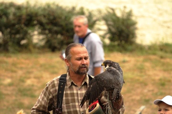 A solymász és madara
