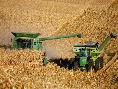 Befellegzett a kukoricatermesztésnek?
