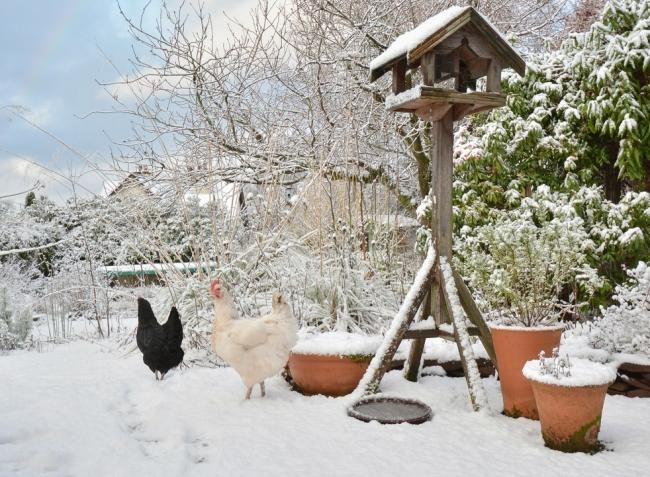 A téli napok kerti teendői