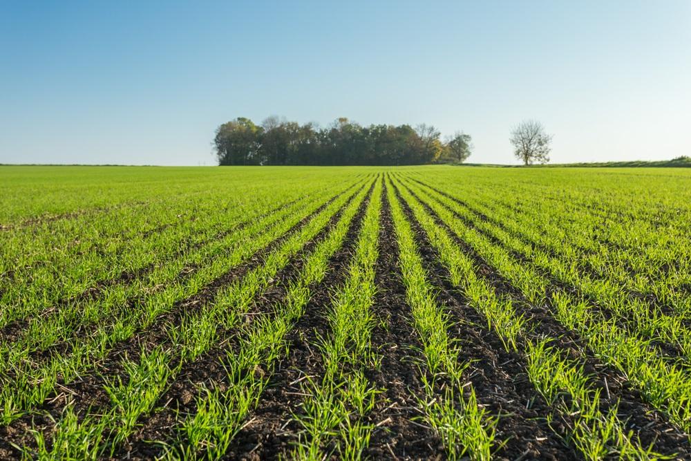 A SWIFTER kompaktorok ideális magágyat készítenek az összes szántóföldi növény számára. A precíz magágy rendkívül fontos előfeltétele a homogén növényállomány létrehozásának.