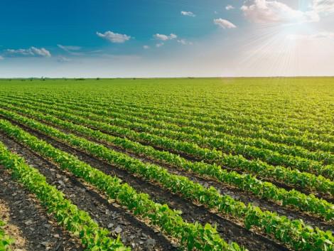 Így terjednek a GMO-növények a világon