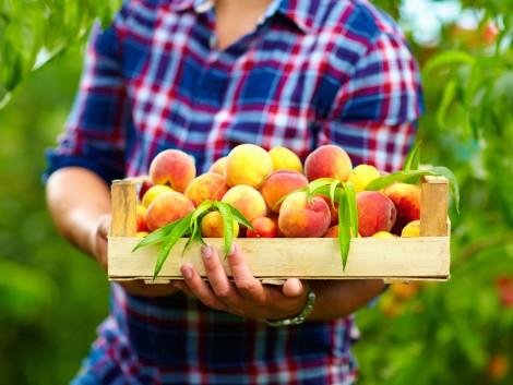 Téli továbbképzés a gyümölcstermelőknek