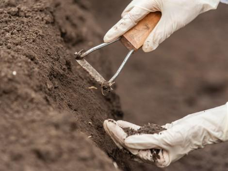 A talajok éve után a talajéletről