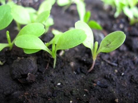 Már a Google is konténerben termeszti a zöldséget