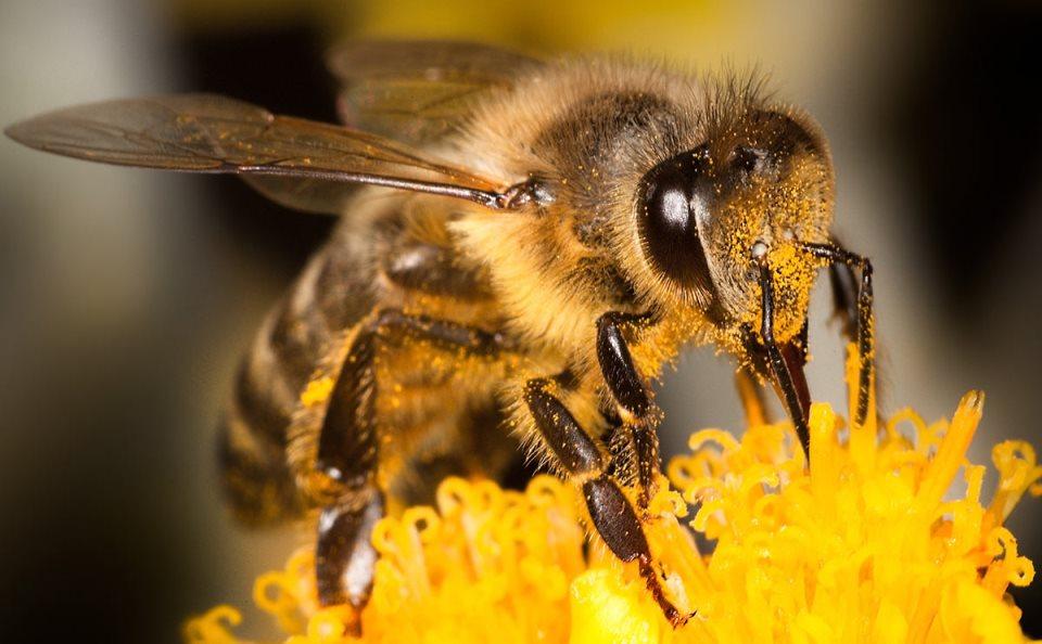 méhek veszélyben