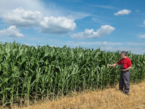 Színes fajtaválasztó 2016-ra – Melyik kukoricahibridek érték a legjobb teljesítményeket?