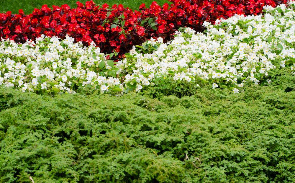 nemzeti színű kert