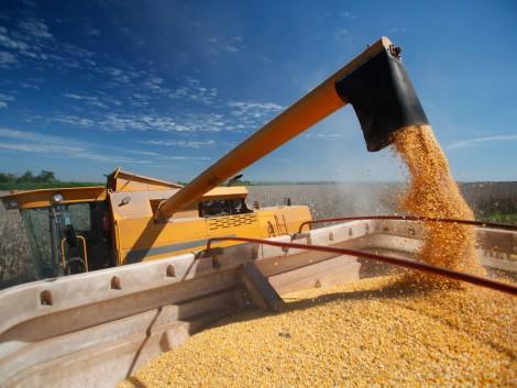 Kína ebben az évben befejezi az állami kukorica-készletezési programot