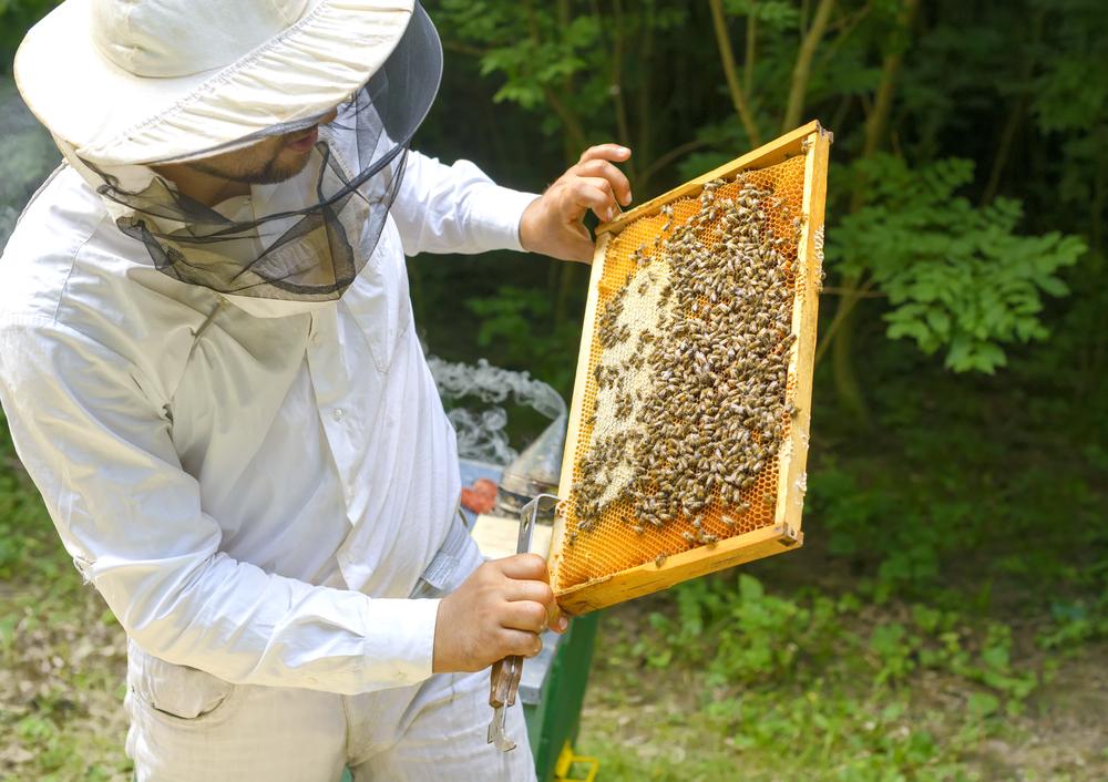 méhész