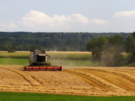 A gazdák jókedvét elrontja a búza nagyon alacsony ára