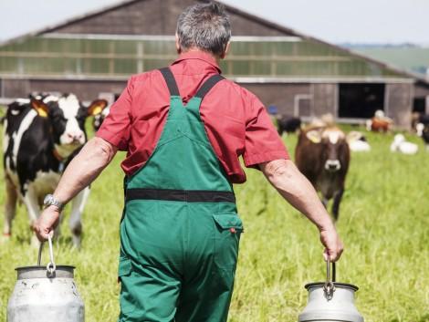 A zöldek szerint túl sok támogatást kapnak a hús- és tejtermelők