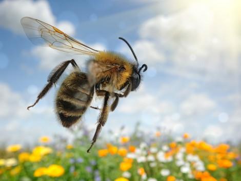 A méheket a légszennyezés is pusztítja