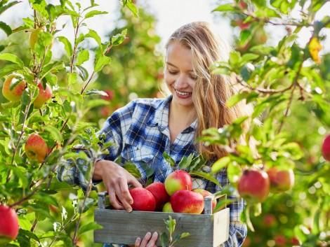 Így terveznek a fiatal gazdák a kertészeti ágazatban