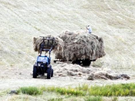 Évi 17 ezer traktor új gazdáját keresik