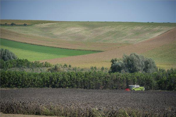 baranyai aratás