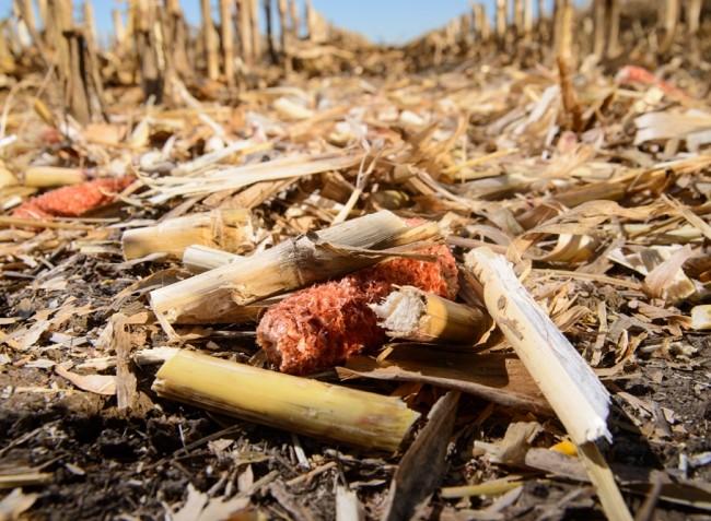 Körkérdés: Ön vajon a megfelelő kukoricabetakarító adaptert használja?